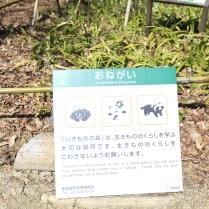 Eine Info zu Waschbären