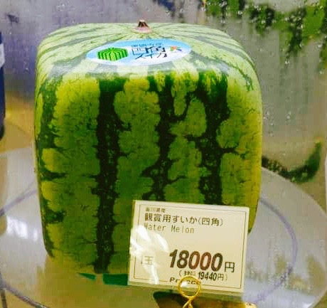 expensive fruit in japan teures obst